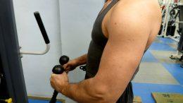 imagesTravailler-biceps-1.jpg
